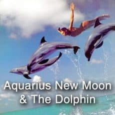 Aquarius New Moon and The Dolphin